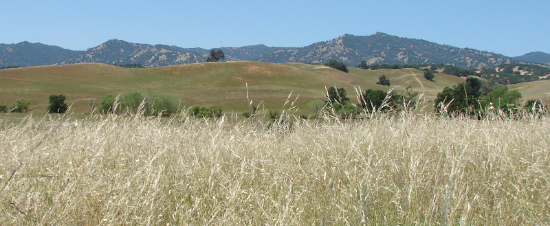 Restored Grassland in Yolo Co. Photo by Andrew Rayburn