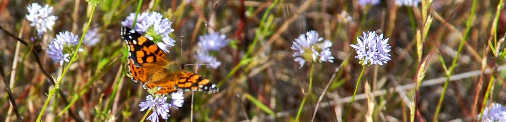 Butterfly in grasslands